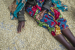 July 17, 2016 - Lusaka, Zambia - A woman sorts out the beans of coffee on the drying floor at the Mubuyu Farm coffee factory, Eighty kilometers South of Lusaka, Zambia on 17 July 2016. Beans, distributed on the patio after fermentation and washing process, have to be dried slowly to 10-11% humidity for 12 days. (Credit Image: © Oleksandr Rupeta/NurPhoto via ZUMA Press)