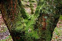 Glendalough's mossy, mystical trees