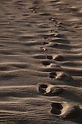 Canoa Quebrada_CE, Brasil...Praia de Canoa Quebrada, no Ceara. Na foto detalhe da areia...Canoa Quebrada beach, Ceara. In this photo some sands...Foto: BRUNO MAGALHAES / NITRO