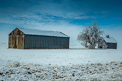 Barns and trees get covered with ice and snow in the early January winter in Central Illinois creating beautiful farmscapes.