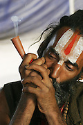 A Sadhu (Hindu ascetic) smoking ganja in a clay chillum during the Kumbh Mela festival, Ujjain, Madhya Pradesh, India. The Kumbh Mela festival is a sacred Hindu pilgrimage held 4 times every 12 years, cycling between the cities of Allahabad, Nasik, Ujjain and Hardiwar. Kumbh Mela is one of the largest religious festivals on earth, attracting millions from all over India and the world. Past Melas have attracted up to 70 million visitors.