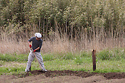 Susumu Hakesaki working at the Arigato Farm project, Ogawa Machi, Iwaki, Fukushima, Japan. Sunday May 6th 2012