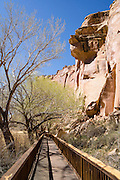 Cottonwood trees line the petroglyphs boardwalk on Utah Highway 24 in Capitol Reef National Park, USA.