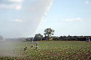 Irrigation water spraying field sugar beet, Iken, Suffolk, England