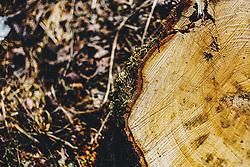 THEMENBILD - ein Baumstumpf mit Jahresringen und Moos am Stamm, aufgenommen am 22. Februar 2020 in Kaprun, Oesterreich // a tree stump with annual rings and moss on the trunk, in Kaprun, Austria on 2020/22. EXPA Pictures © 2020, PhotoCredit: EXPA/Stefanie Oberhauser