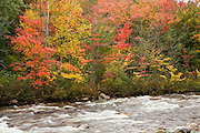 Fall color trees line the banks of the Swift River.