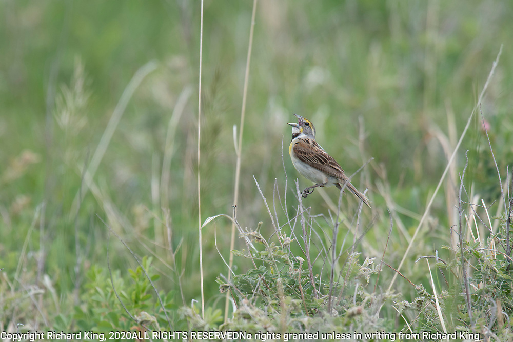 Wildlife photography from Custer SD USA