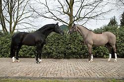 Negro, Valegro<br /> Van Olst Horses - Den Hout 2017<br /> © Dirk Caremans<br /> 04/02/17
