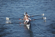 Crew: 22   Trentham Boat Club   STK-PICKING   4+ Band 2<br /> <br /> Head of the Trent 2018<br /> Division 3<br /> <br /> To purchase this photo, or to see pricing information for Prints and Downloads, click the blue 'Add to Cart' button at the top-right of the page.