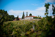 A view of a farm producing vinho verde (young wine). The region of production of the vinho verde is quite big and it go from the border between Spain and Portugal to the north of Porto.