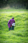 Old Lady in traditional dress, Ecuador, South America