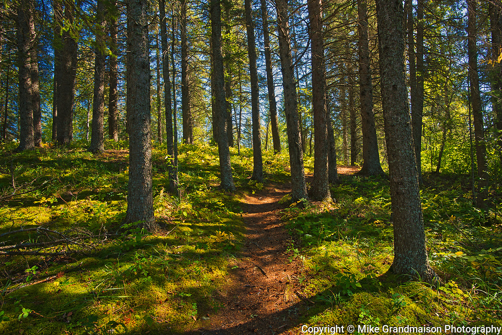 Boreal forest along the Shining Stone Trail<br />Duck Mountain Provincial Park<br />Manitoba<br />Canada