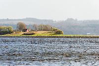 Sweden, Lake Hornborga.