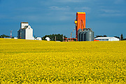 Canola and grain elevators<br /> Kyle<br /> Saskatchewan<br /> Canada