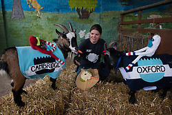 © Licensed to London News Pictures. 31/03/2013. London, UK. A farmer feeds the goats after the Oxford and Cambridge Goat Race at Spitalfields City Farm on March 31, 2013 in London, England. While the historic boat race between Oxford and Cambridge universities took place on the River Thames, the East End celebrated its own traditional goat race at Spitalfields City Farm..Photo credit : Peter Kollanyi/LNP