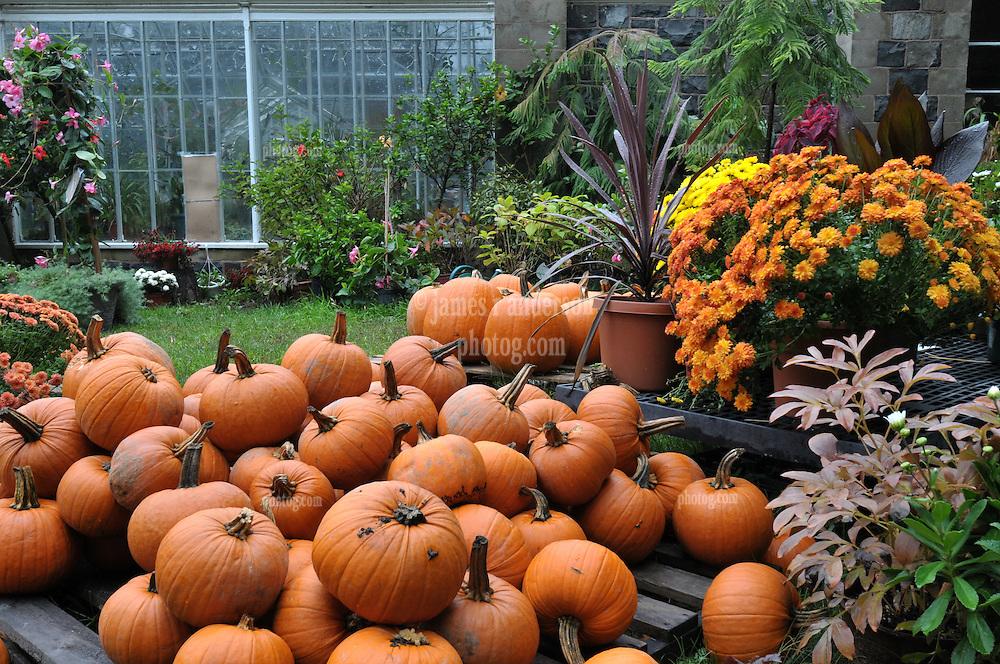 Autumn Colors at Edgerton Park Gardens & Greenhouse, New Haven Connecticut
