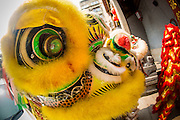 """09 FEBRUARY 2013 - BANGKOK, THAILAND:  Lion Dancers perform in a Chinese temple in Chinatown in Bangkok. Bangkok has a large Chinese emigrant population, most of whom settled in Thailand in the 18th and 19th centuries. Chinese, or Lunar, New Year is celebrated with fireworks and parades in Chinese communities throughout Thailand. The coming year will be the """"Year of the Snake"""" in the Chinese zodiac.   PHOTO BY JACK KURTZ"""