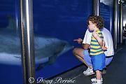 child observes captive bottlenose dolphin, Tursiops truncatus, at Sea World, Orlando, Florida