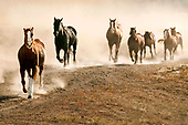 Ranch horses in action