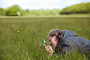 A man examines a rare Green-Winged Orchid with a magnifying glass at the MOD firing range, Jersey Camp, Porchfield, Isle of Wight