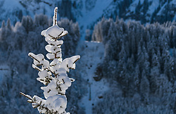 15.12.2017, Gross Titlis Schanze, Engelberg, SUI, FIS Weltcup Ski Sprung, Engelberg, im Bild verschneite Bäume, Winterlandschaft // snowy trees, winter landscape during Mens FIS Skijumping World Cup at the Gross Titlis Schanze in Engelberg, Switzerland on 2017/12/15. EXPA Pictures © 2017, PhotoCredit: EXPA/JFK
