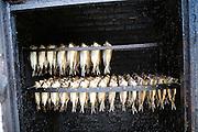 Smoking herrings, Zuiderzee museum, Enkhuizen, Netherlands