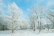 Hoarfrost on Seine River Forest in winter.<br /> Winnipeg<br /> Manitoba<br /> Canada