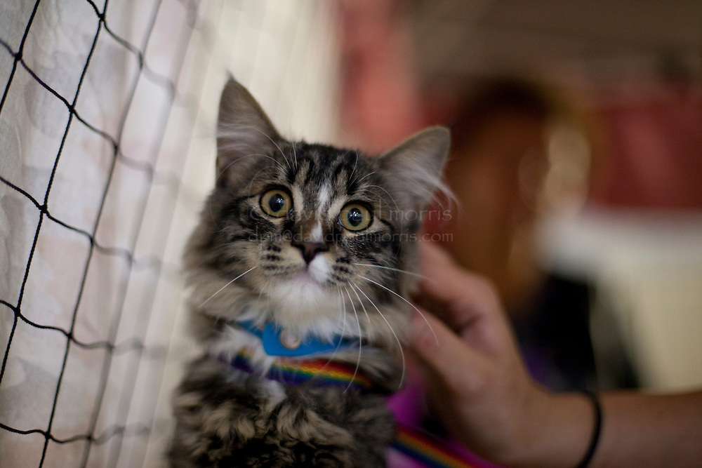 """MCDERMITT, NV - AUG 16: 6 month old """"Kitty"""" is checked out during a clinic sponsored by the Humane Society of the United States August 16, 2009 in McDermitt Nevada.  (Photograph by David Paul Morris)"""