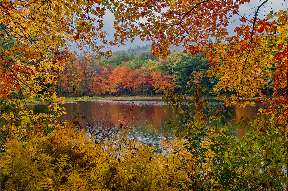 Maple branches and ferns in fall frame view of misty river, Meredith, NH