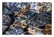 River water surface refraction ripples in the sun with colourful rocks, Golden Ears Provincial Park