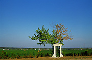 The Clos des Ormes premier cru vineyard in Morey Saint Denis, Bourgogne. Single tree and stone portico