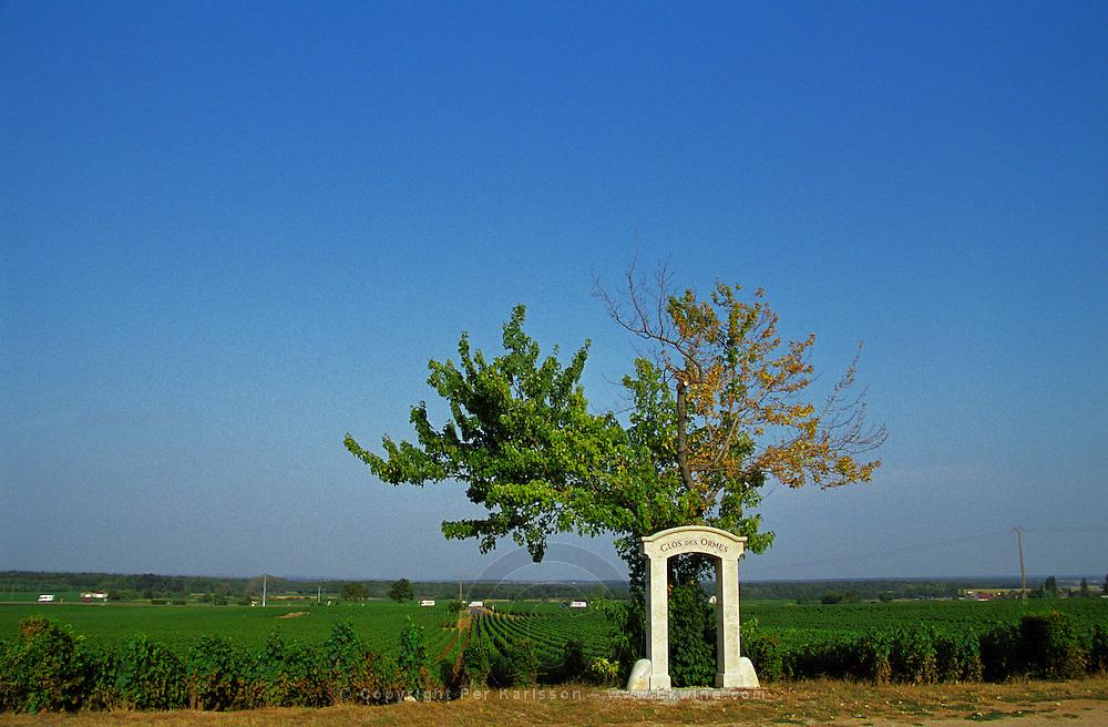 The Clos des Ormes premier cru vineyard in Morey Saint Denis, Bourgogne. Single tree and stone portico