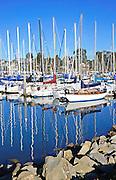 Sailboats in the Santa Cruz Harbor