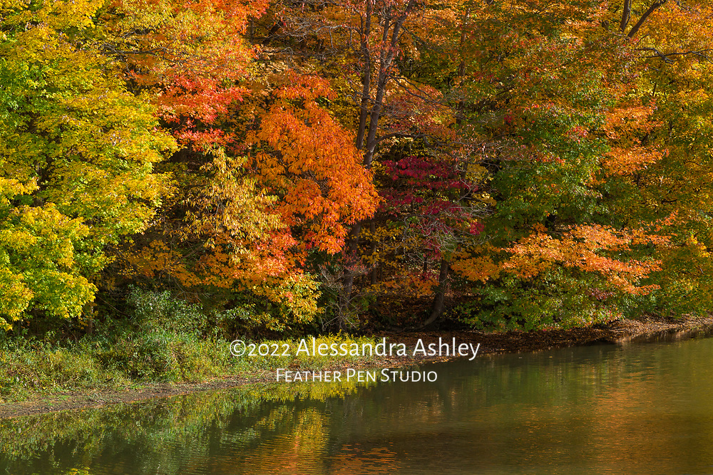 Morning light highlights autumn foliage and reflections.