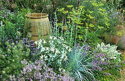 Eryngium giganteum , Peucedanum verticillare, perovskia, hebe and empty urn in the gravel garden.