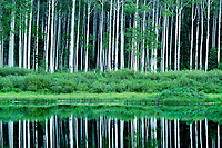 Aspen trees reflect in the water of Willow Lake in Utah's Big Cottonwood Canyon on a warm Summer evening.