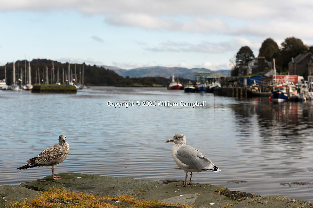 Seagulls on the waterfront at the  village of Tarbert along the East Loch Tarbert in Kintyre souther Scotland.