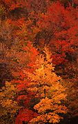 Fall foliage, Pennsylvania forest