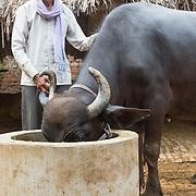 CAPTION: . LOCATION: Baharayen, Faizabad District, Uttar Pradesh, India. INDIVIDUAL(S) PHOTOGRAPHED: Ram Khilavan.