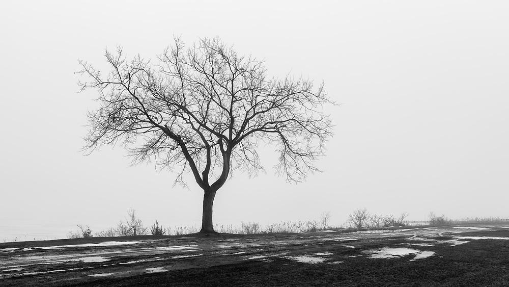 https://Duncan.co/tree-silhouette