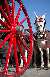 Coach wheel red white horse Vienna carriage