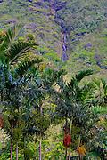 Botanical garden, Waipio Valley, Big Island of Hawaii