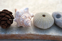A beachcomber's collection displayed on a natural stone table.