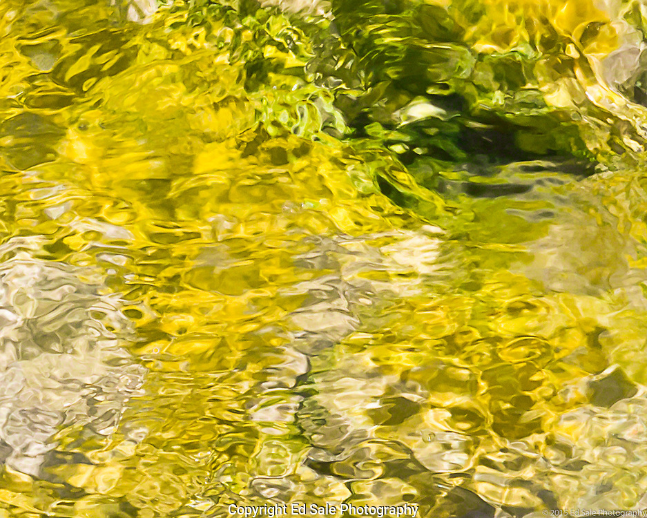 Micro-organisms in a stream flowing from Mickey Hot Springs pool in southeastern Oregon produce a  yellow covering on the stream bed.