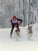 Alaska. Skijorring Races, Bud Rice and his dogs; Anchorage Skijor Club.  (MR)