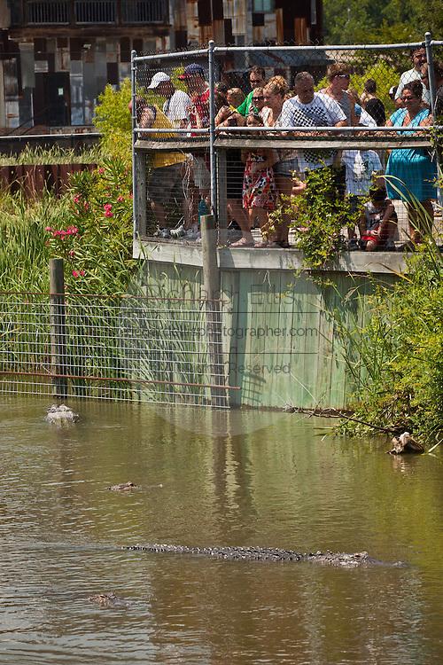 Tourists watch American alligators (Alligator mississipiensis) at Alligator Adventure in Myrtle Beach, SC.