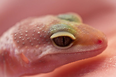 Mike & Molly - Gecko's