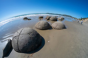 The Moeraki Boulders are unusually large and spherical boulders lying along a stretch of Koekohe Beach on the wave-cut Otago coast of New Zealand between Moeraki and Hampden. They occur scattered either as isolated or clusters of boulders within a stretch of beach where they have been protected in a scientific reserve.