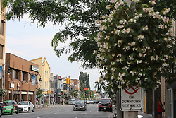 August 3, 2017 - Oshawa, ON, Canada - OSHAWA, ON- AUGUST 3  -  Simcoe Street in downtown  Oshawa. Oshawa is among the top performing urban economies in the country, according to a Conference Board of Canada's analyses of 15 medium-sized census metropolitan areas published Thursday. in Oshawa. August 3, 2017. Steve Russell/Toronto Star (Credit Image: © Steve Russell/The Toronto Star via ZUMA Wire)