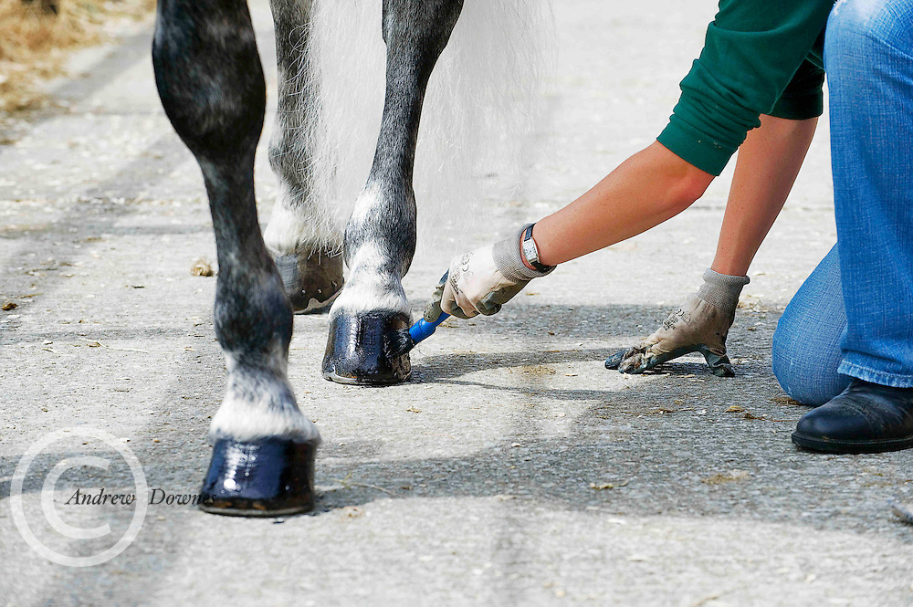 Carmel Canavan, Moycullen, polishes the shoes of her horse at the 87th Annual Connemara Pony Show 2010, Clifden, Co.Galway. Photo: Andrew Downes